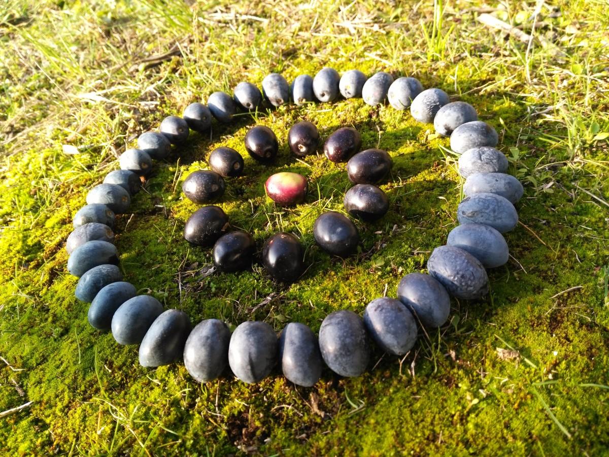 Landart06-PA-Bouilladisse olives