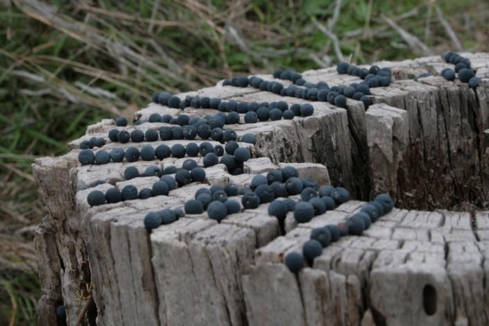 Landart06-PO-Malpassé graines